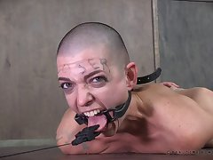Video of shaved head Abigail Dupree getting rough tortured
